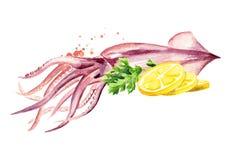 Frischer Kalmar mit Zitrone, Meeresfrüchte, Aquarellhandgezogene Illustration lokalisiert auf weißem Hintergrund stock abbildung