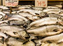 Frischer König Salmon Lizenzfreies Stockfoto