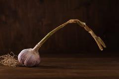 Frischer Knoblauch Lizenzfreies Stockfoto