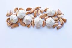 Frischer Knoblauch auf weißem Hintergrund lizenzfreies stockbild