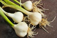 Frischer Knoblauch mit stammen Gemüsegarten ab lizenzfreies stockfoto