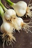 Frischer Knoblauch mit stammen Gemüsegarten ab stockbilder