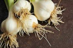 Frischer Knoblauch mit stammen Gemüsegarten ab Lizenzfreie Stockfotos
