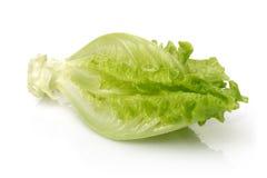 Frischer Kopfsalat Stockfoto