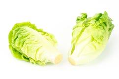 Frischer Kopfsalat (Baby Lattich) Stockbilder