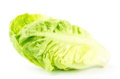 Frischer Kopfsalat (Baby Lattich) Lizenzfreies Stockfoto
