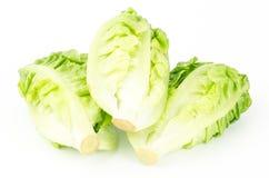 Frischer Kopfsalat (Baby Lattich) Stockfotos