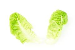 Frischer Kopfsalat (Baby Lattich) Stockfoto