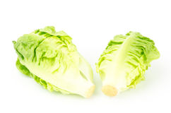 Frischer Kopfsalat (Baby Lattich) Lizenzfreie Stockfotos