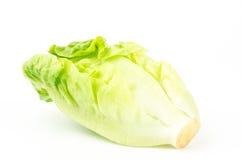 Frischer Kopfsalat (Baby Lattich) Lizenzfreies Stockbild