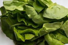 Frischer Kopfsalat des gr?nen Salats lokalisiert auf Wei? stockbilder