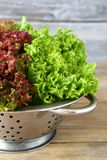 Frischer Kopfsalat in einem Sieb auf hölzernem Hintergrund Stockfotos
