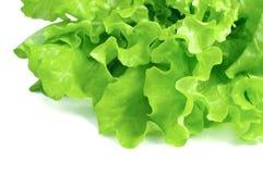 Frischer Kopfsalat getrennt auf weißem Hintergrund lizenzfreies stockfoto