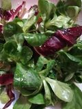 Frischer Kopfsalat, mit Olivenöl stockbild