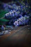 Frischer Lavendel lizenzfreies stockfoto