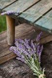 Frischer Lavendel stockbilder