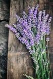 Frischer Lavendel lizenzfreies stockbild