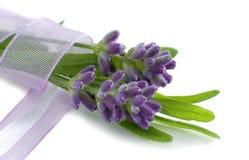 Frischer Lavendel auf Weiß Lizenzfreie Stockfotografie