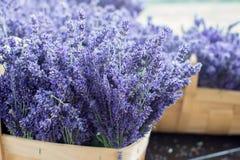 Frischer Lavendel in einem Korb Stockfotografie