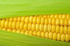 Frischer Mais lizenzfreie stockfotografie