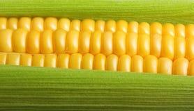 Frischer Mais Lizenzfreies Stockfoto