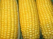 Frischer Mais Lizenzfreies Stockbild