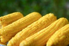 Frischer Mais Lizenzfreie Stockfotos