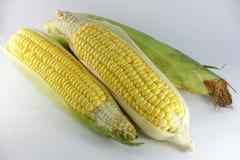 Frischer Mais stockfotografie