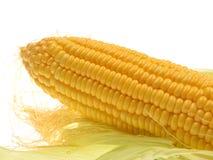 Frischer Mais lokalisiert auf weißem Hintergrund Stockfotografie