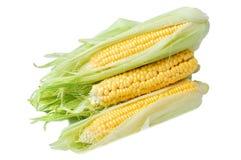 Frischer Mais mit Grünblättern auf Weiß Stockfotografie