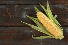 Frischer Maiskolben Stockbilder