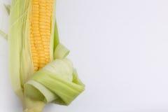 Frischer Maiskolben Stockfoto