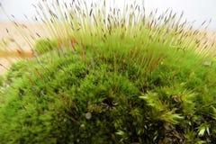 Frischer Moosgrünvorhang des Frühlinges stockbild