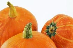 Frischer orange Kürbis Lizenzfreie Stockbilder
