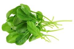 Frischer organischer Gartenrocket-Salat stockfoto
