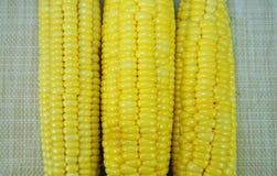 Frischer organischer gelber Zuckermais Stockfoto