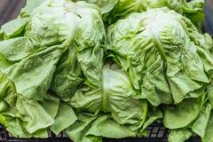 Frischer organischer Kopfsalat lizenzfreie stockbilder