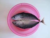 Frischer am Ort gefangener Blaufisch, gesäubert und kochfertig Stockbilder