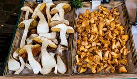 Frischer Pilz, Pfifferlinge und Porcino-Boletus, in den Kästen für Verkauf stockfotografie
