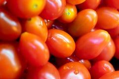 Frischer Roma Tomatoes bereit zum Verbrauch in einem Salatbar lizenzfreie stockbilder