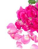 Frischer rosa Rosenblumenstrauß mit den Blumenblättern lizenzfreies stockfoto