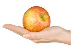 Frischer roter Apfel in der Frauen `s Hand. Stockbilder