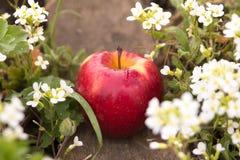 Frischer roter Apfel im Gras Lizenzfreies Stockfoto