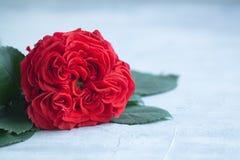 Frischer roter Garten der Weinlese stieg Valentinsgruß ` s oder Hochzeit ` s Tagespostkartenkonzept mit einem copyspace Stockbilder