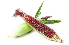 Frischer roter Mais stockfotografie