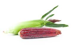 Frischer roter Mais stockbilder