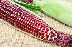 Frischer roter Mais lizenzfreies stockbild