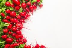 Frischer roter Rettich auf weißem Hintergrund Lizenzfreie Stockfotos