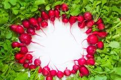 Frischer roter Rettich auf weißem Hintergrund Stockfoto