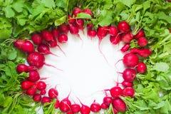 Frischer roter Rettich auf weißem Hintergrund Stockfotografie